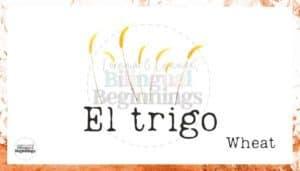 Los Pollitos Dicen Nursery Rhyme Flashcards- El trigo