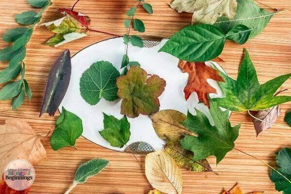 Fine Motor Leaf Activity for Preschoolers